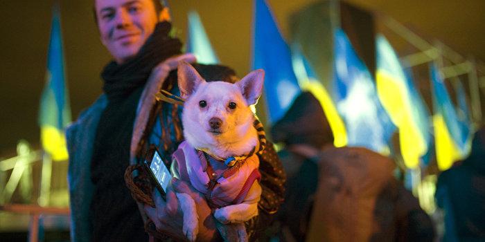 В Киеве устроили конкурс собак в вышиванках