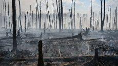 Ураганный ветер раздул масштабный пожар в одесском природном парке