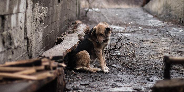 В Авдеевке после «зачисток» ВСУ без вести пропали 20 человек