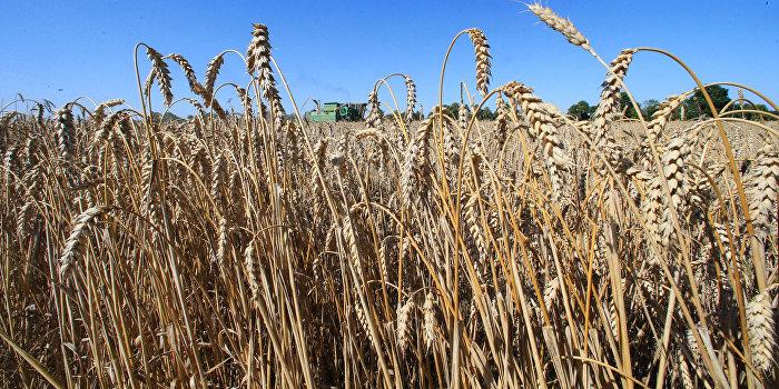 Цены на украинскую пшеницу за неделю упали на 2,7 процента