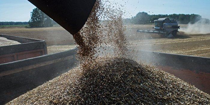 Россия готовится ставить рекорды по экспорту пшеницы