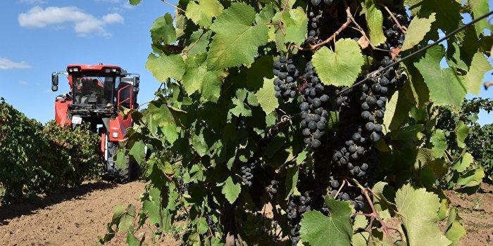 Порошенко поручил сделать Украину членом Международной организации виноградарства и виноделия