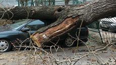 Ураган в Одессе: 60-летнюю женщину насмерть придавило упавшее дерево