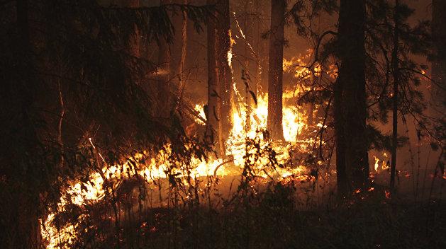 ГосЧС: На Украине начались масштабные лесные пожары