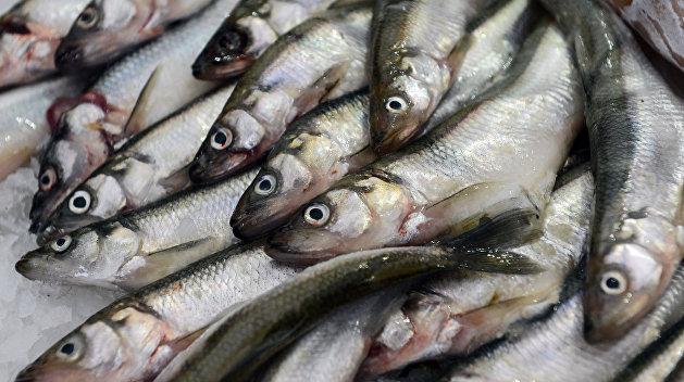 Украина и РФ ударили по рукам: Вылов рыбы в Азовском море урегулирован