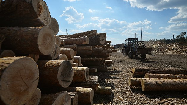 В минагрополитики выступили за экспорт украинского леса-кругляка за границу