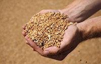 «Аграрная сверхдержава»: Украина нарастила импорт пшеницы в 187 раз