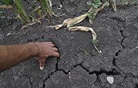 Одесские аграрии протестуют против земельной реформы Зеленского