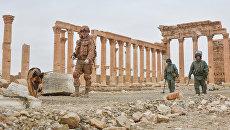 Не Белоруссия. Суздальцев назвал единственную страну ОДКБ, которая поддержала Россию в Сирии