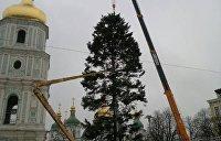 Главная елка Украины облысела во время установки