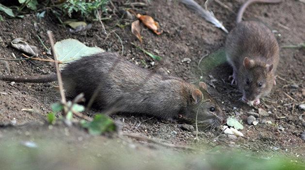 Кривой Рог: крысы пришли, люди ушли