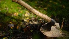 В ООН предостерегли от вырубки леса в Карпатах