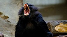 Кусаются и раздевают: на Херсонщине отдыхающим не дают покоя обезьяны