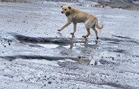 Собаки вытесняют людей: 10 тыс. бродячих животных оккупировали Николаев