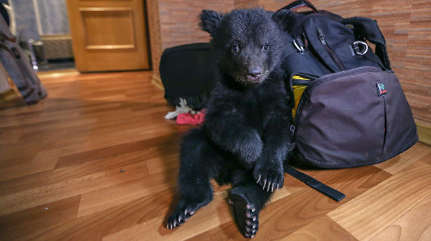 Купить медведя и фламинго: Как украинцы промышляют контрабандой редких животных
