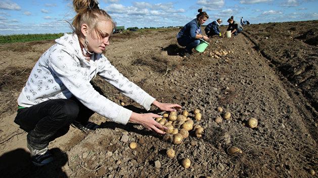 «Правый сектор» против херсонских фермеров
