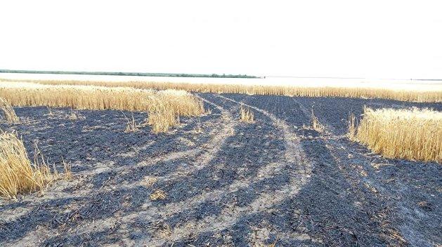В Киевской области сгорело 23 га пшеничного поля