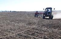 Экономист: Аграрная Украина обречена на нищету