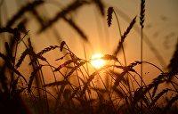 Украина сокращает производство продуктов