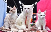 Зоозащитники спровоцировали: Киевская попрошайка едва не съела котенка