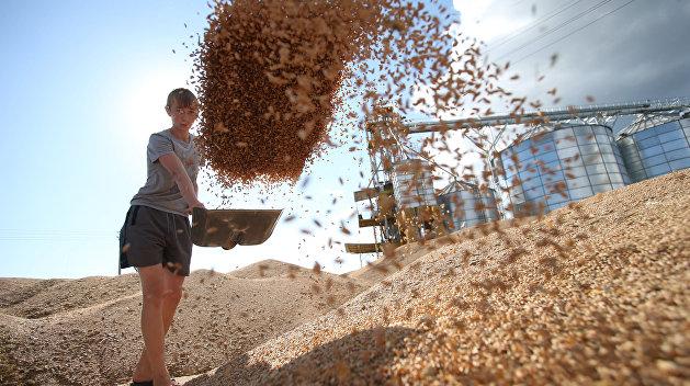 «УкрАгроКонсалт»: Экспорт украинского зерна упал впервые за 5 лет
