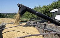 Украинские аграрии экспортируют зерно, не боясь оставить страну без хлеба