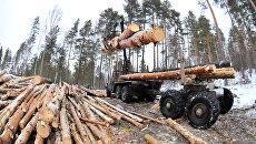 ЕС победил карпатский лес: власти Украины не способны защитить природные ресурсы страны