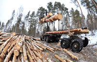 Верховная Рада разрешила вывозить украинский лес на экспорт