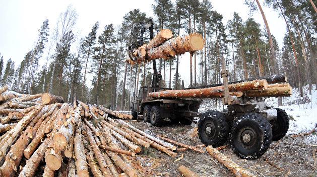 2019-й год — леса на Украине больше не будет