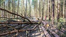 ТЭС в Киевской области сжигала радиоактивную древесину из Чернобыльской зоны