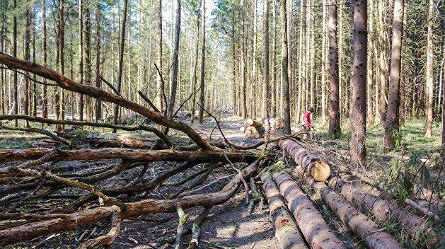Депутат: Вырубка карпатских лесов разрушит экосистему Украины