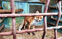 Донбасс: Мир животных на войне людей. Фоторепортаж