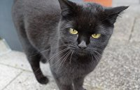 Впервые в мире: во Львове провели перепись уличных котов