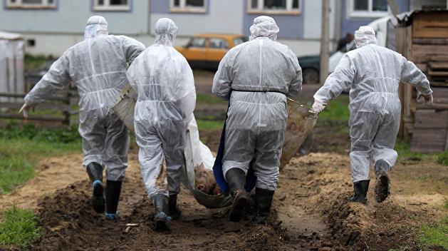 Африканская чума закрепилась в пяти областях Украины
