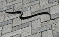 В Киеве сбежавшая из террариума змея устроила нешуточный переполох