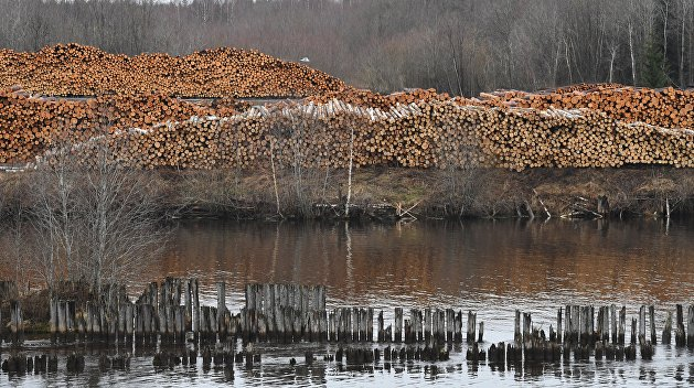 «Преступление государственного уровня». На Украине системно вырубают леса
