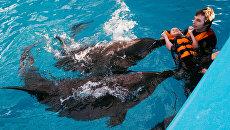 «Дельфины руководят людьми». Кандидат на пост главы Академии наук сделал шокирующее заявление