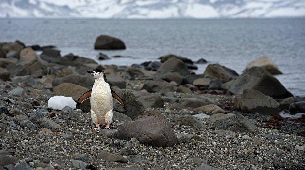 Украинские чиновники нажились на Антарктиде