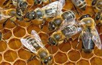 На Украине агрессивные пчелы убили 37-летнего мужчину