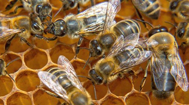 Восемь миллионов пчел погибли из-за халатности «Укрпочты»