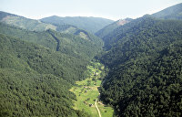 Миллионы квадратных метров. Верховная Рада разрешила вырубать карпатские леса