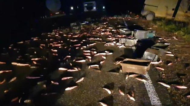 Тонну рыбы разметало по трассе. Появилось видео смертельного ДТП в Одесской области