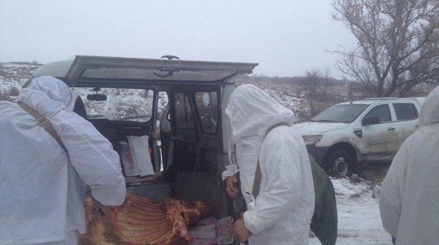 Украинские контрабандисты попались при попытке незаконно вывезти мясо