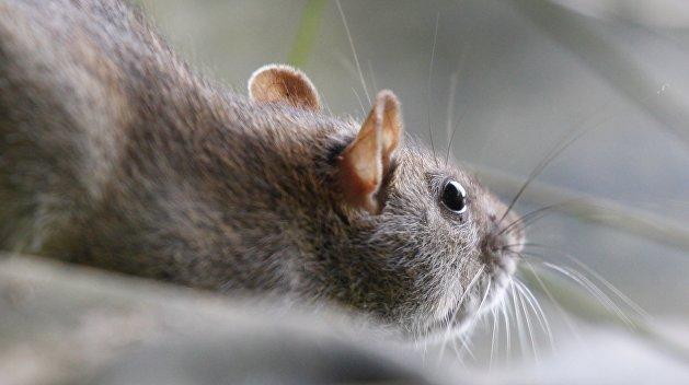 «Недруги подбросили»: В Ровно сотрудники магазина оправдались за крысу в продуктах