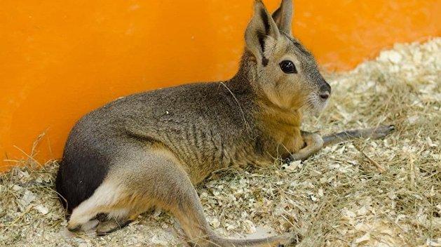 В зоопарке под Киевом родился экзотический зверь