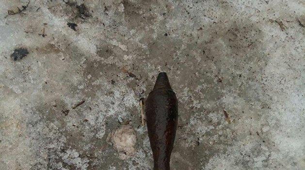 Под Полтавой в общественном туалете нашли мину