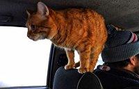 «Работает» в такси: в Харькове кот стал настоящей звездой Vgorode.ua