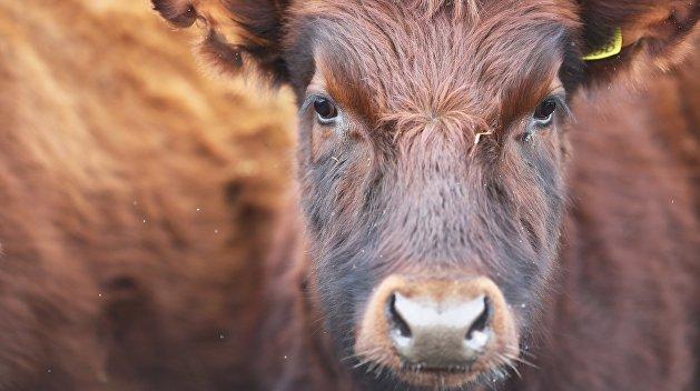 В Херсонской области почти 2 тыс. украинцев вынуждены голосовать в лечебнице для скота