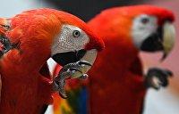 Пернатая контрабанда: 150 попугаев пытались переправить в Белоруссию из Житомирской области