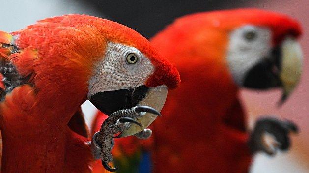 Чей-то заказ: в Луцке из зоопарка украли двух дорогих попугаев
